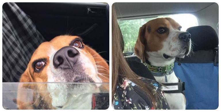 Akcesoria samochodowe dla psa