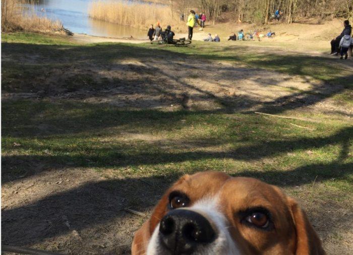 Wielkopolski Park Narodowy z psem