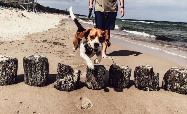 Wyjazd nad morze z psem